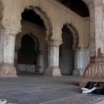 Raj Mahal dog