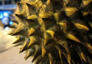 Spiky durian