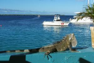 IMG_6770 iguana