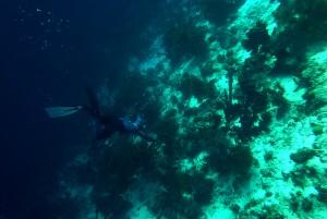 Diving Deirdre