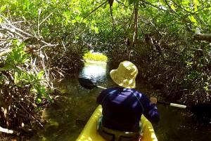 Navigating the mangroves