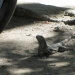 Parking lot lizard