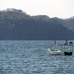 Playa Panama pelicans