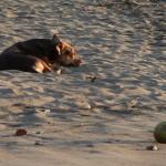 Stray dog at sunset