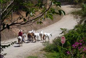 Horse highway