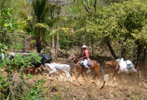 Horse herding