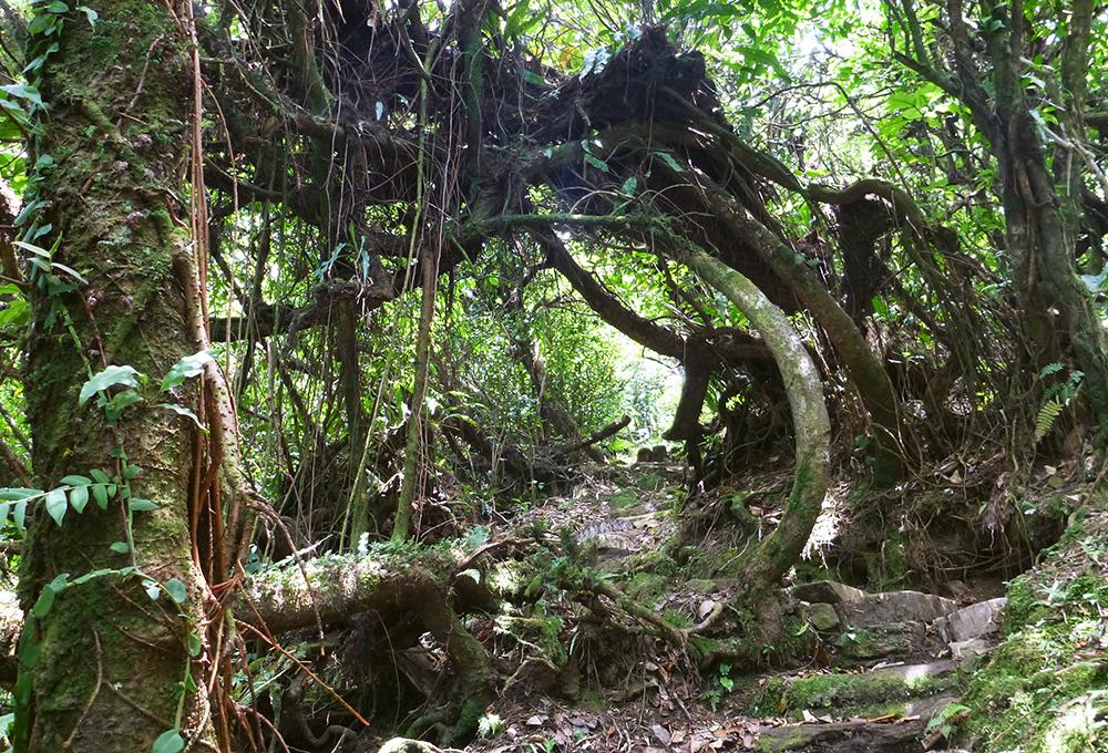Jungle doorway