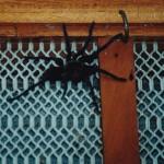 Visitor 1998
