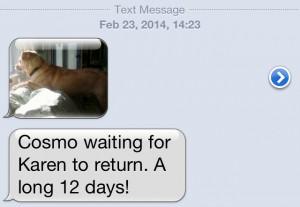 Cosmo waits
