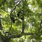 Monkey hangout
