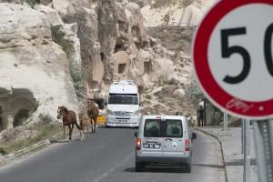 Horses on Goreme road