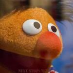 Ernie up close