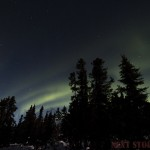 Aurora behind trees